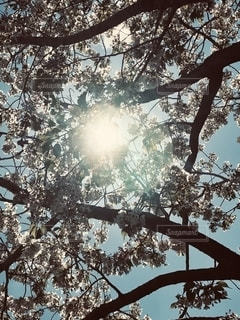 木の近くでの写真・画像素材[2691908]