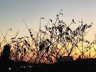 秋の夕暮れの写真・画像素材[2697961]