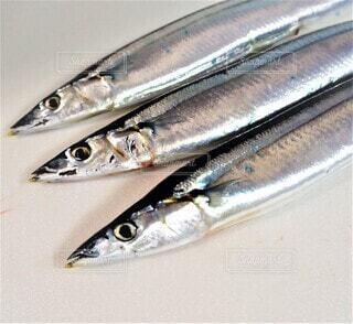 秋の味覚秋刀魚のクローズアップの写真・画像素材[3737775]