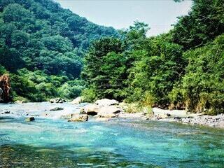 木々に囲まれた清らかな水の流れの写真・画像素材[3740468]