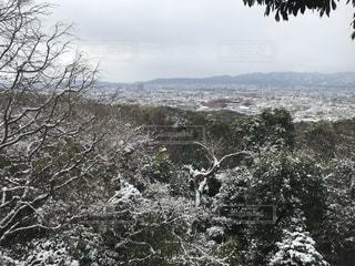 木の隣の丘の中腹を間近で見るの写真・画像素材[2695267]