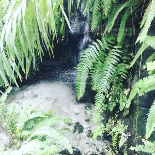 水と植物の写真・画像素材[1050052]