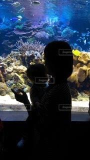 水族館の写真・画像素材[3889466]