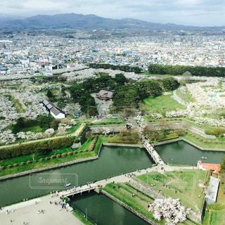 桜の写真・画像素材[128974]