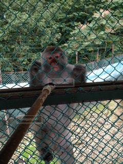 No.132559 猿