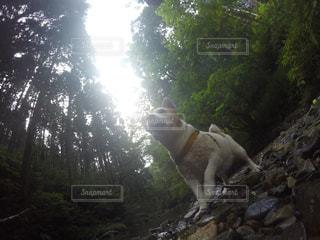 犬の写真・画像素材[191107]
