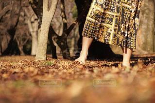 裸足で感じる季節の写真・画像素材[1727552]