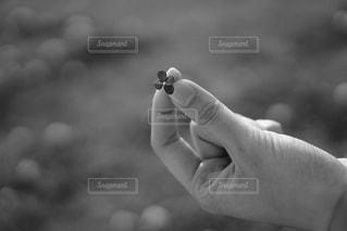四葉のクローバーをみっけの写真・画像素材[2215565]