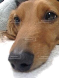 犬の写真・画像素材[104580]