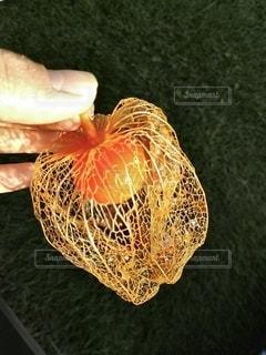 秋のかをりホオズキの写真・画像素材[2695756]