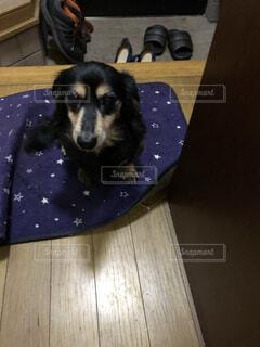 玄関に犬の写真・画像素材[4566033]