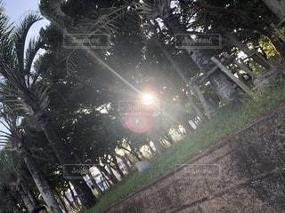 雨の中の木の写真・画像素材[2787617]