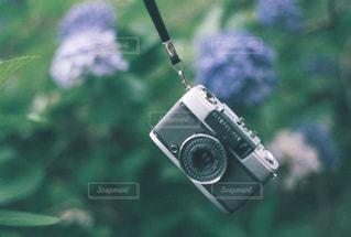 紫陽花とハーフカメラの写真・画像素材[2696353]