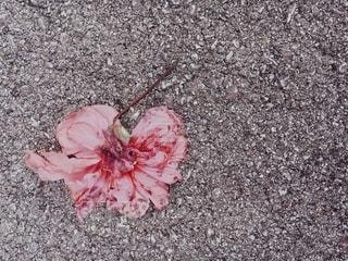 花の写真・画像素材[2696755]