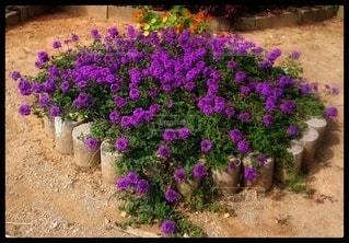 花壇の写真・画像素材[2708759]