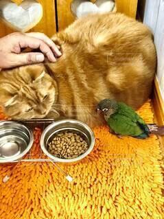 猫に寄り添う鳥さんの写真・画像素材[4002470]