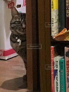 本棚の上に座っている猫の写真・画像素材[2700311]