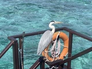水上コテージに鳥!の写真・画像素材[2701983]