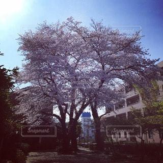 風景 - No.104722