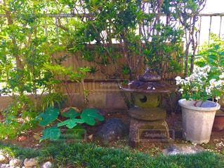 庭の植物と灯篭の写真・画像素材[725197]
