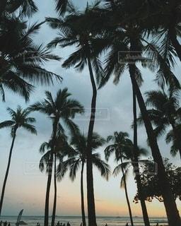ワイキキビーチの写真・画像素材[2701905]