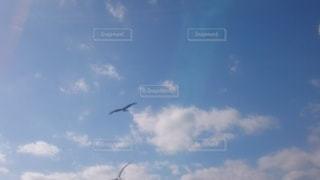空を飛んでいる鳥の写真・画像素材[2704315]