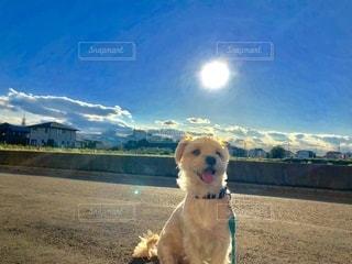 犬と空の写真・画像素材[2706080]