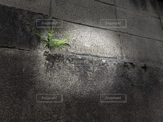 草の写真・画像素材[2728541]