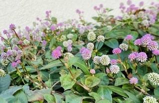 花畑のクローズアップの写真・画像素材[2728551]