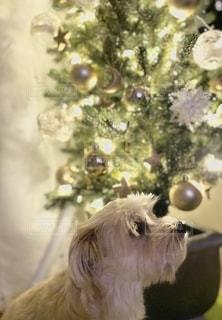 クリスマスツリーの写真・画像素材[2755757]