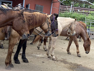 馬の写真・画像素材[2904508]