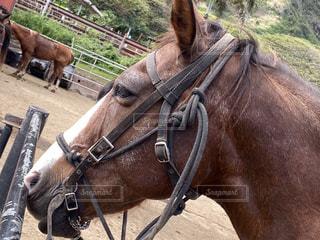 馬の写真・画像素材[2904510]