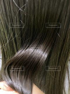 艶髪の写真・画像素材[3337784]