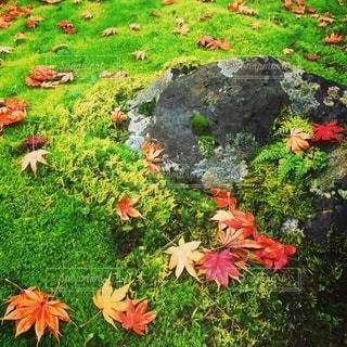 秋の庭園の写真・画像素材[2706468]