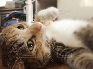 猫をクローズアップするの写真・画像素材[2707454]
