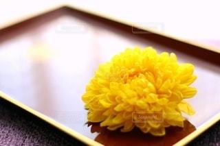 菊の小花の写真・画像素材[2707455]