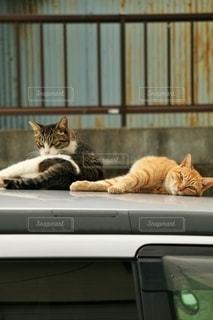 車の上に横たわっている猫の写真・画像素材[2711698]