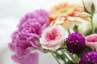 花をクローズアップするの写真・画像素材[2711704]