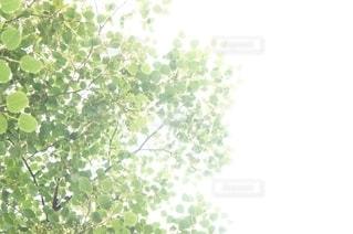 木の近くでの写真・画像素材[2711706]