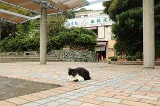 鎌倉の公園のねこの写真・画像素材[2711865]