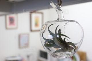 ガラスの中のエアプラントの写真・画像素材[2711968]