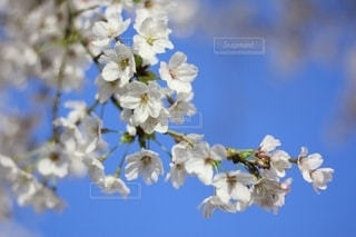 花をクローズアップするの写真・画像素材[2711977]