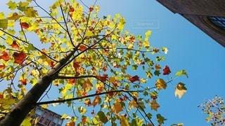 秋晴れの空を見上げての写真・画像素材[2707253]