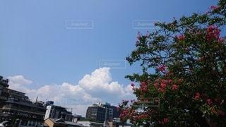 真夏の空と大きな木の写真・画像素材[2718957]