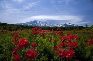 鳥海山の写真・画像素材[104890]