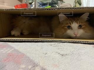 箱の中で寝転ぶネコの写真・画像素材[2952962]