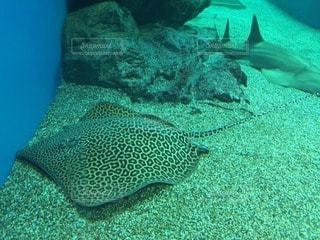 魚の写真・画像素材[105052]