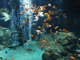魚の写真・画像素材[111421]