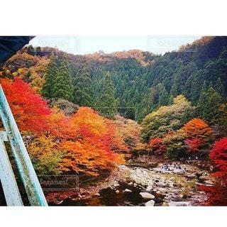秋の渓流の写真・画像素材[2712163]