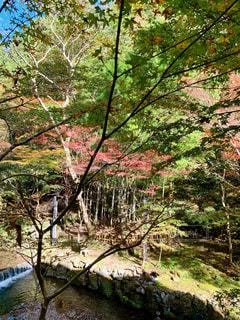 秋の森の写真・画像素材[2712615]